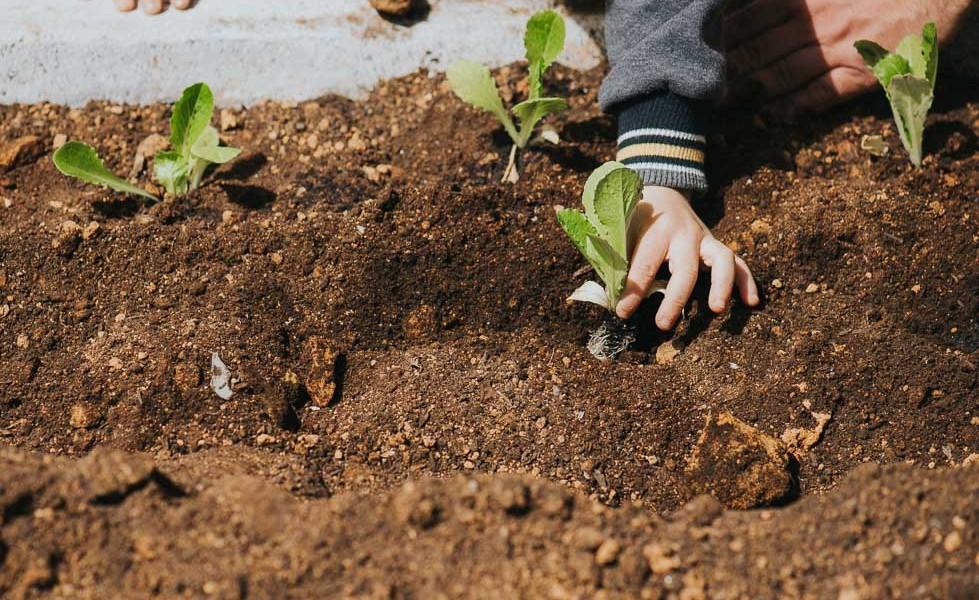 Δημιουργία φθινοπωρινού λαχανόκηπου στο σχολείου