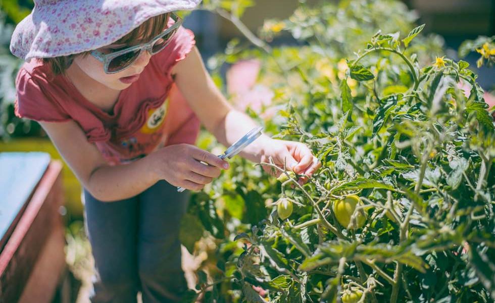 Δημιουργία ανοιξιάτικου λαχανόκηπου