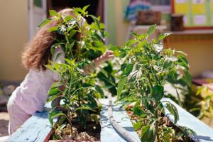 Σχολικοί κήποι, εποχικότητα και τοποφαγία