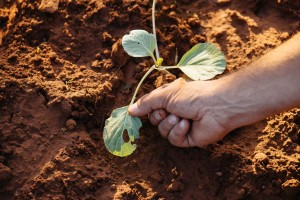 Προστασία φυτών στον σχολικό κήπο