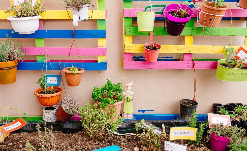 Πέντε αρωματικά φυτά για το σχολικό κήπο